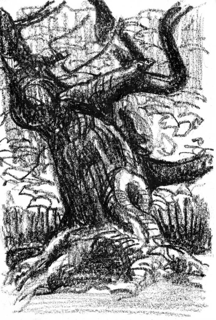 A loose crayon sketch of an old, tangled trunk of a tree.
